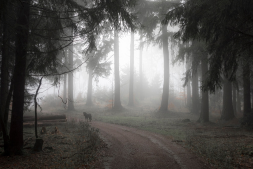 Spooky「Germany, Hesse, fog in the nature park Taunus」:スマホ壁紙(5)