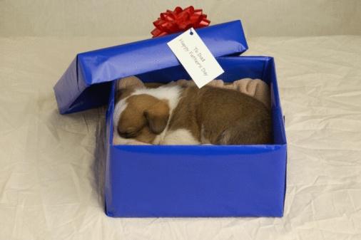 父の日「Puppy sleeping in a gift box」:スマホ壁紙(14)