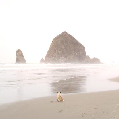Cannon Beach「Rear view of pug sitting on beach, Cannon Beach, Oregon, America, USA」:スマホ壁紙(14)