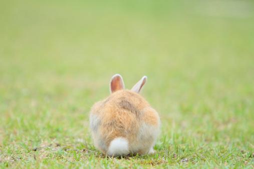 うさぎ「Rear View of Rabbit」:スマホ壁紙(1)