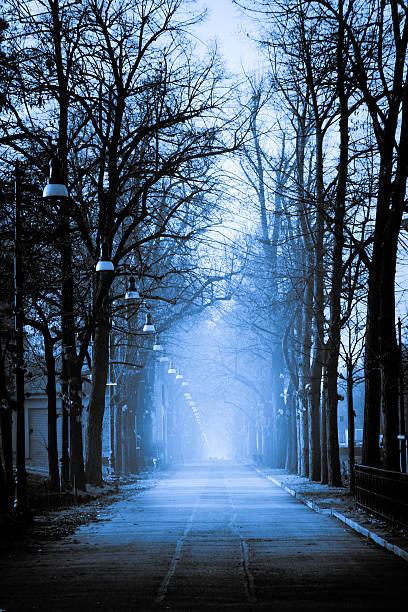Foggy boulevard:スマホ壁紙(壁紙.com)