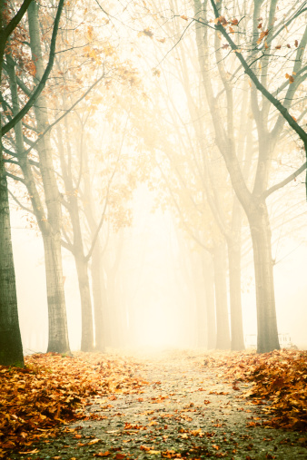 Piedmont - Italy「Foggy boulevard」:スマホ壁紙(14)