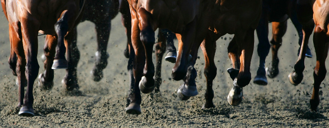 Horse「The Bet Direct On Sky Active」:スマホ壁紙(3)