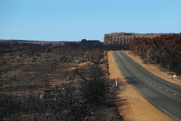 Kangaroo Island「Kangaroo Island Begins Recovery Process Following Devastating Bushfire Season」:写真・画像(13)[壁紙.com]