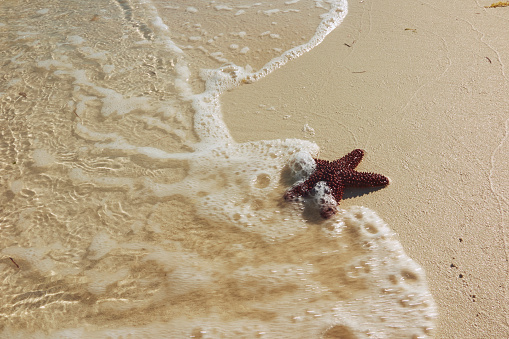 Beauty「A starfish washed up on a Caribbean beach.」:スマホ壁紙(2)