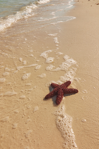 Beauty「A starfish washed up on a Caribbean beach.」:スマホ壁紙(1)
