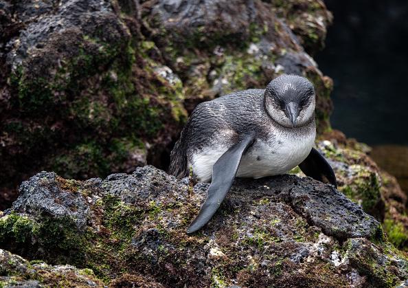 世界遺産「Nature and Human Lives Seek Equilibrium In Galapagos」:写真・画像(9)[壁紙.com]