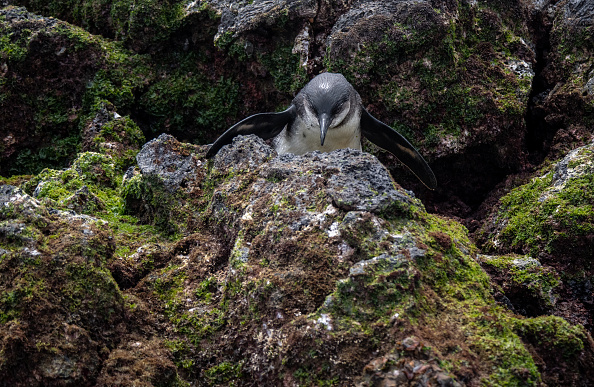 世界遺産「Nature and Human Lives Seek Equilibrium In Galapagos」:写真・画像(7)[壁紙.com]