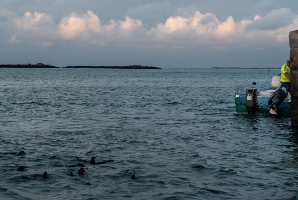 世界遺産「Nature and Human Lives Seek Equilibrium In Galapagos」:写真・画像(19)[壁紙.com]