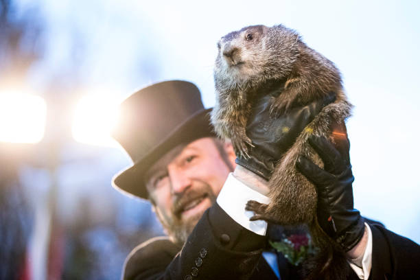 "Brett Carlsen「""Punxsutawney Phil"" Makes Annual Winter Prediction On Groundhog Day」:写真・画像(12)[壁紙.com]"