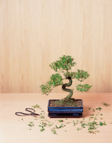 Prune「Bonsai tree with trimmings and clippers」:スマホ壁紙(14)