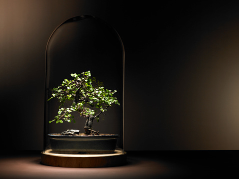 Protection「Bonsai tree under glass dome」:スマホ壁紙(6)