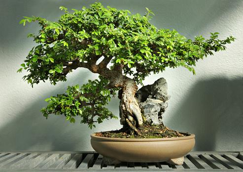 Spirituality「Bonsai tree in pot HDR」:スマホ壁紙(19)