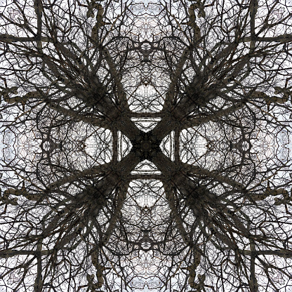 Bare Tree「Abstract Branch Symmetry」:スマホ壁紙(15)
