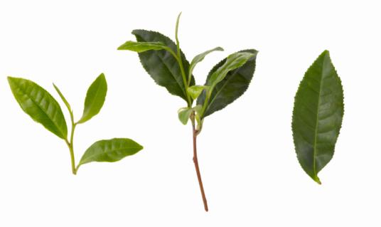 Dried Tea Leaves「Green Tea Leaves」:スマホ壁紙(4)