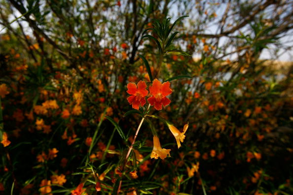 Wilderness Area「Park In Irvine Deemed California's First Natural Landmark」:写真・画像(19)[壁紙.com]