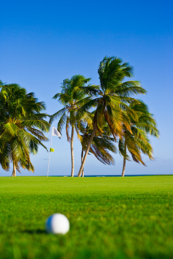 Taking a Shot - Sport「Golf Ball and palm trees.」:スマホ壁紙(5)