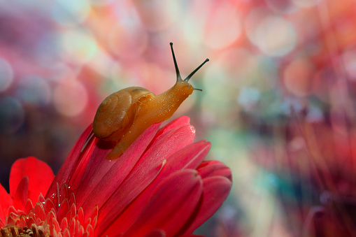 snails「Snail on red flower」:スマホ壁紙(12)