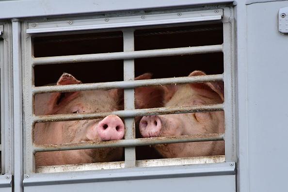 肉「Protesters Demonstrate As Toennies Plant Reopens」:写真・画像(15)[壁紙.com]