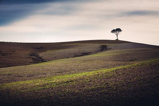 Rolling「Tuscany Field With Lone Tree」:スマホ壁紙(19)