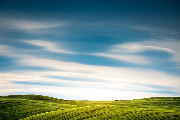 Tuscany Field:スマホ壁紙(壁紙.com)