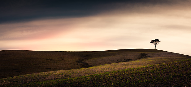 Rolling Landscape「Tuscany Fields With Lonely Tree」:スマホ壁紙(2)