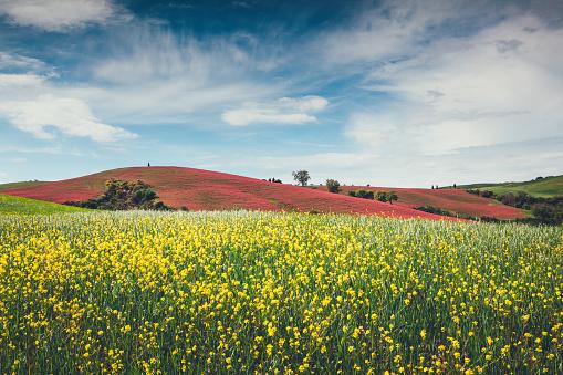 Val d'Orcia「Tuscany Field」:スマホ壁紙(9)