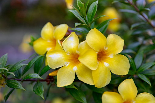 Grenadines「Tropical flower in Bequia, Saint Vincent and the Grenadines, 2019」:スマホ壁紙(18)