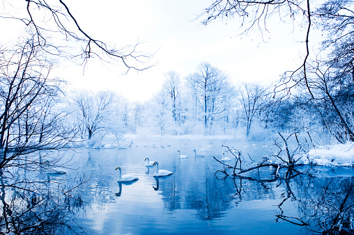 February「Swans in Winter Landscape」:スマホ壁紙(0)
