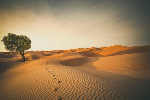 footprints in the desert:スマホ壁紙(壁紙.com)