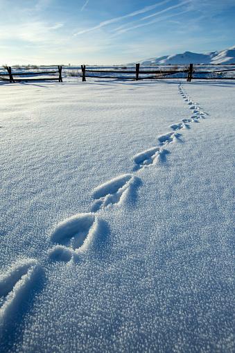 The Nature Conservancy「Footprints in snowy farm field」:スマホ壁紙(16)