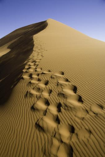 Namibian Desert「Footprints on Sand Dune」:スマホ壁紙(9)