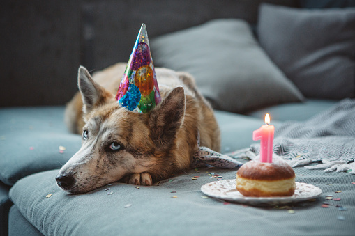 Birthday「Cute dog celebrating his bithday」:スマホ壁紙(3)