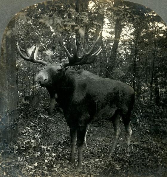 Red Deer - Animal「Monarch Of All I Survey」:写真・画像(18)[壁紙.com]