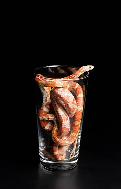 Corn snakes in pint glass:スマホ壁紙(壁紙.com)