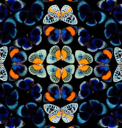 Digital Composite「Peruvian Tropical Butterfly Pattern Asterope」:スマホ壁紙(5)