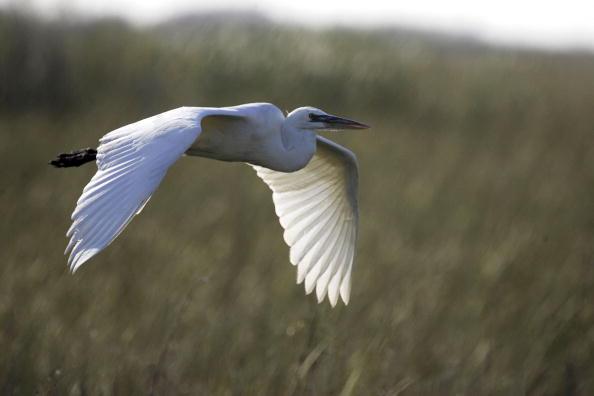 鳥「Audubon Society Sponsors Annual Christmas Bird Count」:写真・画像(19)[壁紙.com]