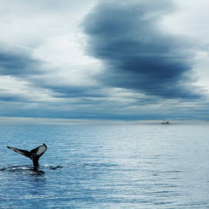クジラ「鯨」:スマホ壁紙(12)