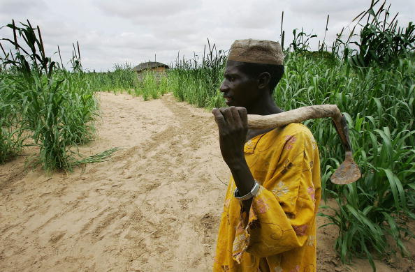 Millet「Impoverished Niger Battles Against Famine」:写真・画像(5)[壁紙.com]