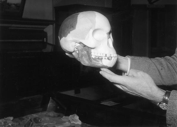 Human Hand「Reconstructed Skull」:写真・画像(6)[壁紙.com]