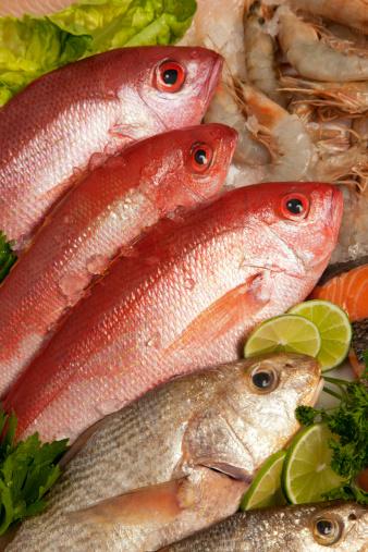 熱帯魚「魚の構成」:スマホ壁紙(11)