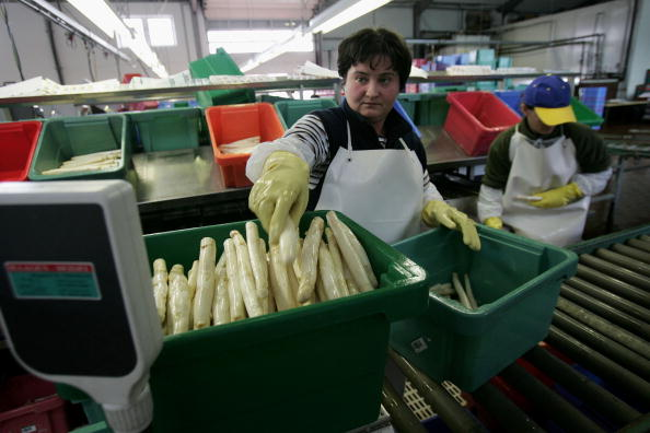 Asparagus「Asparagus Harvest Draws Seasonal Workers」:写真・画像(11)[壁紙.com]
