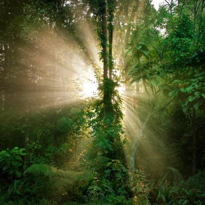Rainforest「Aisia tropical rain forest」:スマホ壁紙(8)