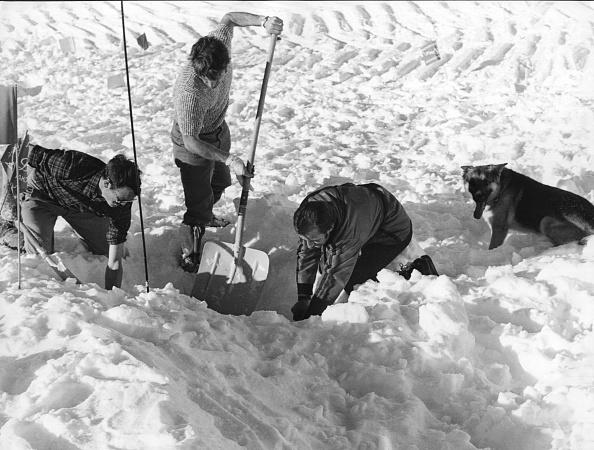 Working Animal「Avalanche School」:写真・画像(9)[壁紙.com]