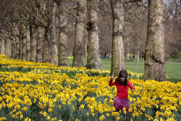 スイセン「Long Awaited Spring Sunshine Arrives In London」:写真・画像(17)[壁紙.com]