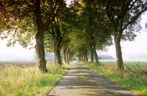 Avenue「Avenue in Riemsloh, Osnabruecker country, Germany」:スマホ壁紙(17)