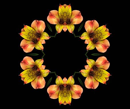 Alstroemeria「Peruvian Lily, Alstroemeria, Mandala」:スマホ壁紙(13)