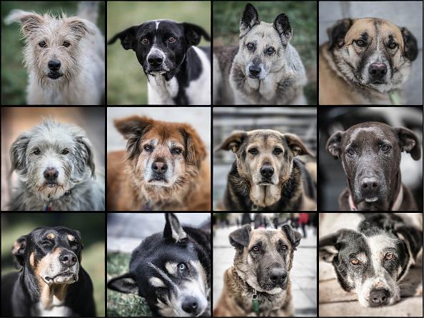 Image Montage「Street Dogs Of Athens」:写真・画像(1)[壁紙.com]