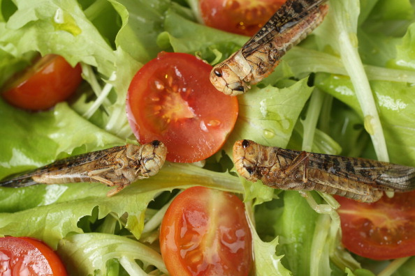 Salad「Insects: Our Food Of The Future?」:写真・画像(13)[壁紙.com]