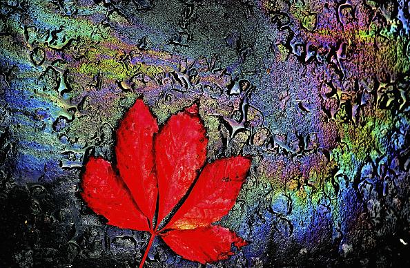 Autumn「Autumn Arrives In The UK」:写真・画像(18)[壁紙.com]